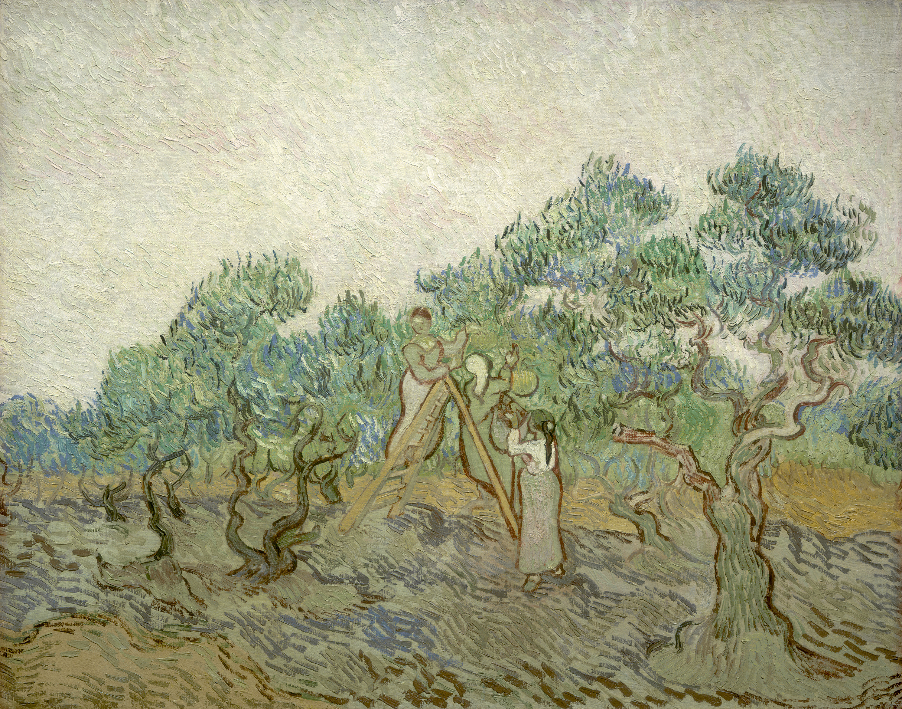 Vincent van Gogh - The Olive Orchard 1889