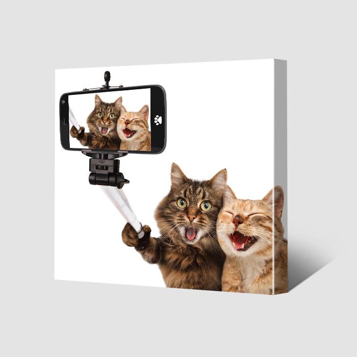 selfie of pets