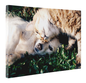 Kindness Through Canvas Prints