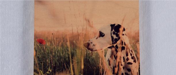 Favorite Pet Photos
